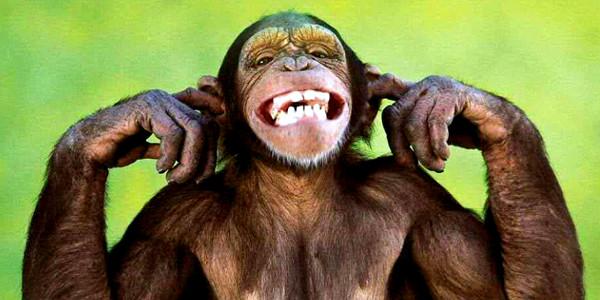 web business scimmia